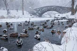 DucksCPark winter